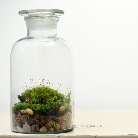 Moss Terrarium// Pharmacy Jar// Woodland Lovers// DIY kit