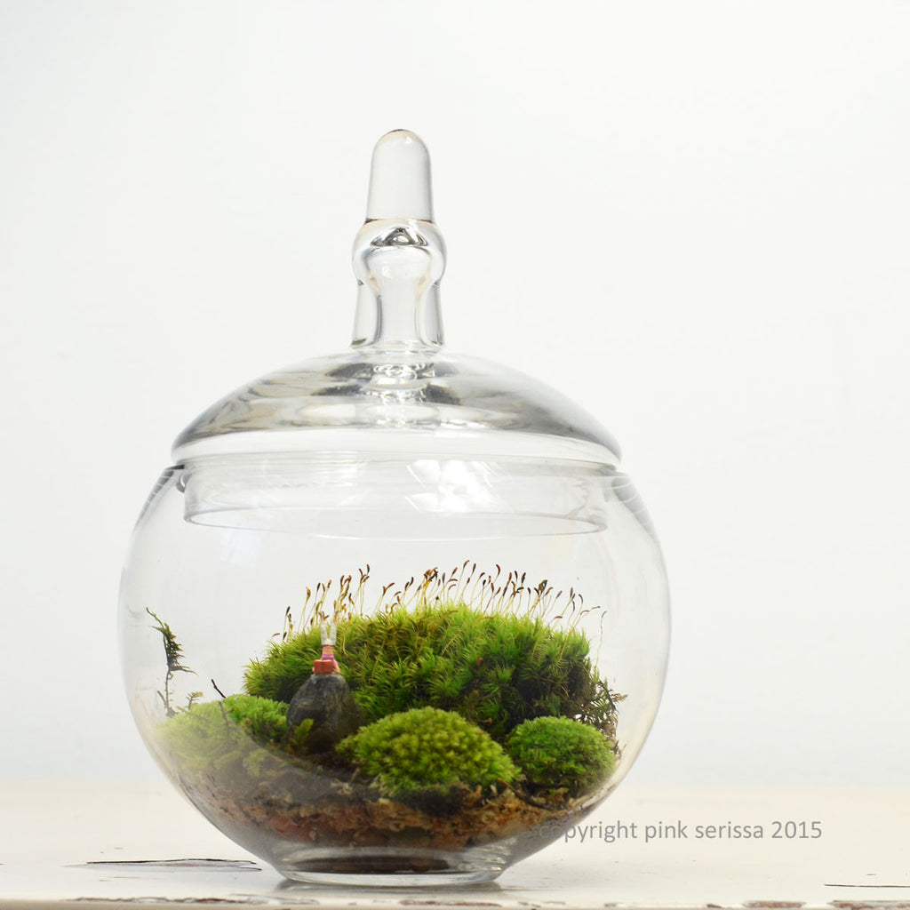 Moss Terrarium// Headstand// DIY kit