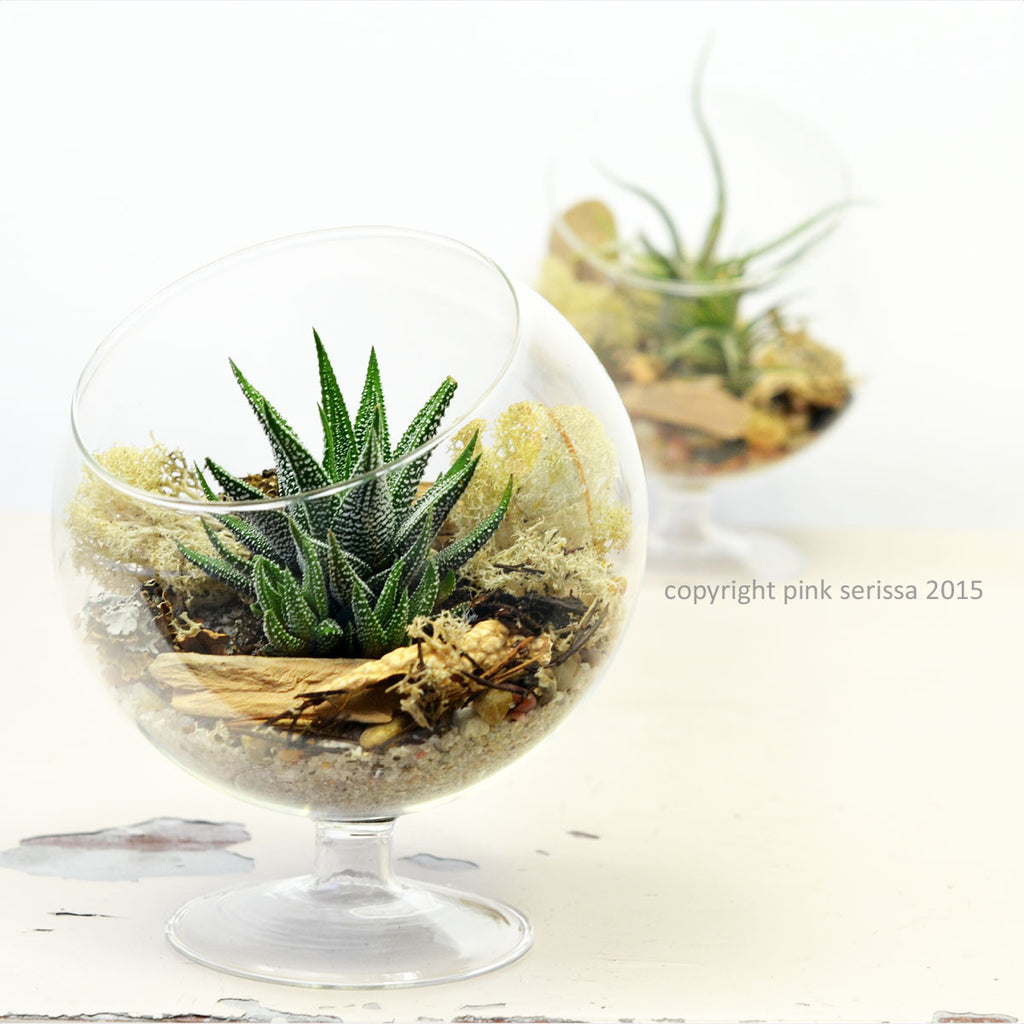 Succulent Terrarium// Footed Glass Orb// DIY kit