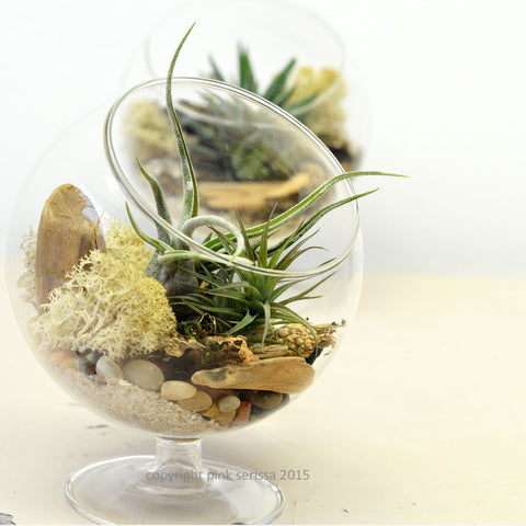 Footed Glass Orb// Air Plant Terrarium