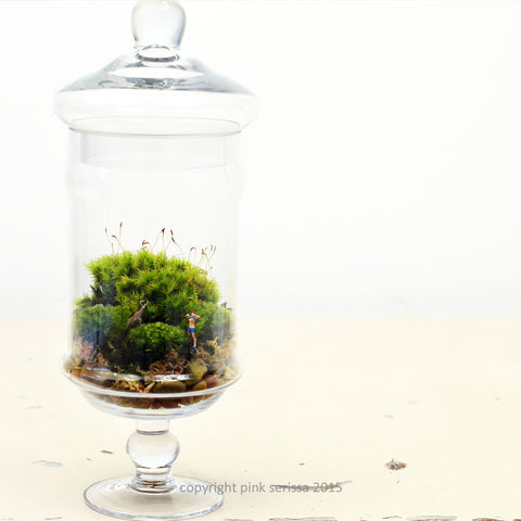 Moss Terrarium// Flasher// DIY Kit