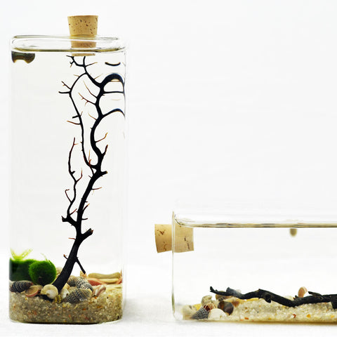 Tall Rectangle// Marimo Aqua Terrarium