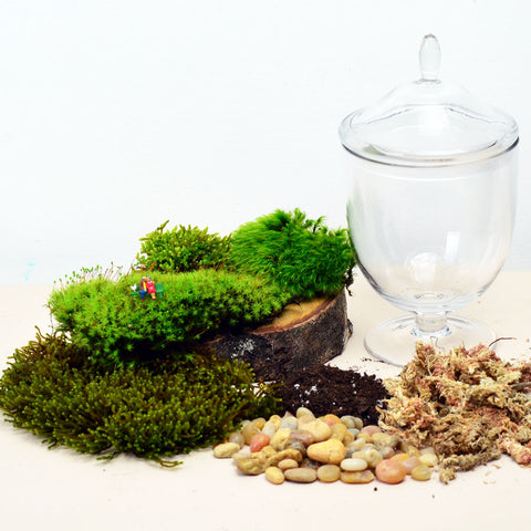 Woodland Lovers// Moss Terrarium// DIY Kit