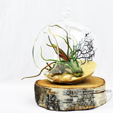 Beach// Air Plant Terrarium