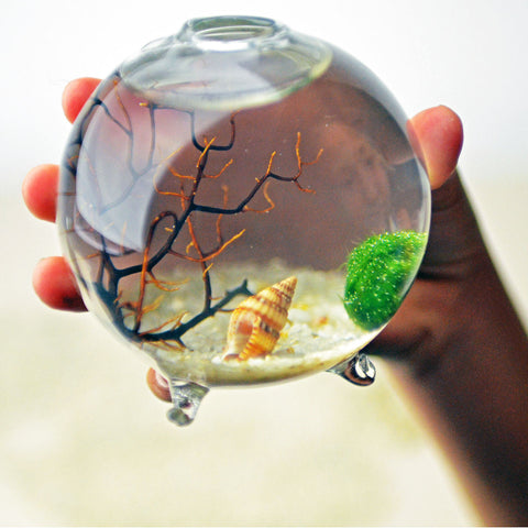 Single Sphere// Miniature Aqua Terrarium