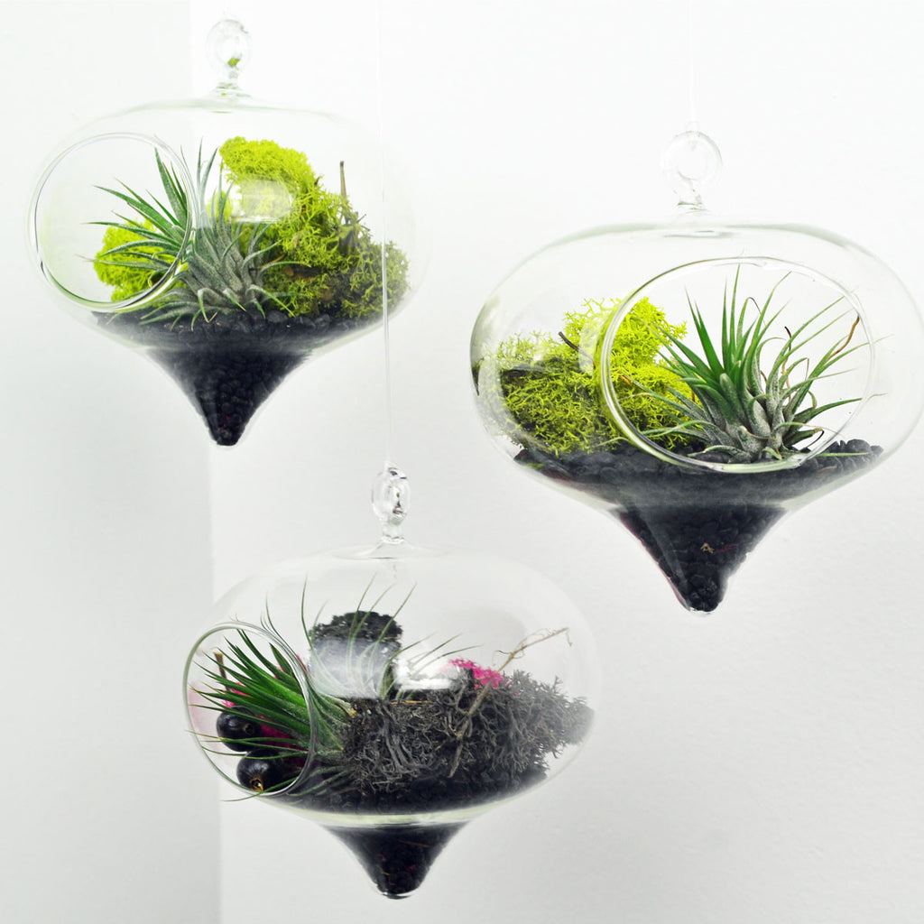 Set of three hanging air plant terrariums// Diamond