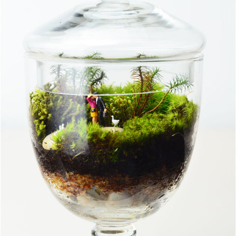 Moss Terrarium// Woodland Lovers 2