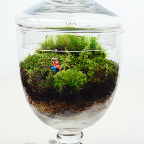 Moss Terrarium// Woodland Lovers 3