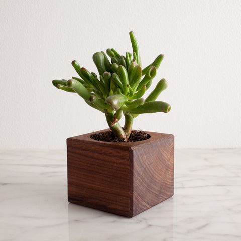 American-made Magnetic Planter by Wood Thumb - Carpenter Hill