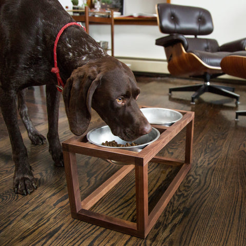 modern dog feeder, handmade with walnut wood and heavy duty steel dog bowls - side view shown in living space with dog; made in usa by wake the tree | carpenter hill