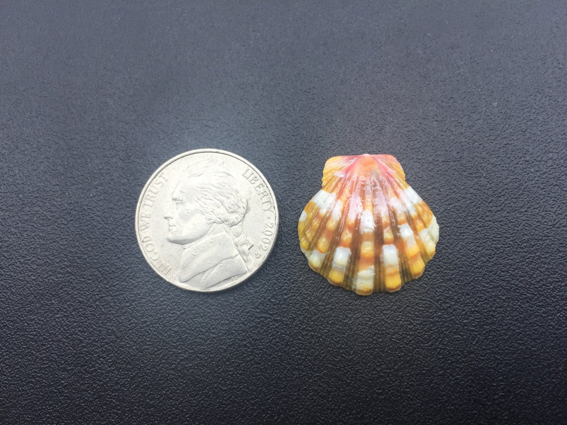 0560 Single Painted Sunrise Shell