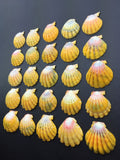0545 Lot Of 25 Of The Most Beautiful High Grade Sunrise Shells From North Shore Oahu