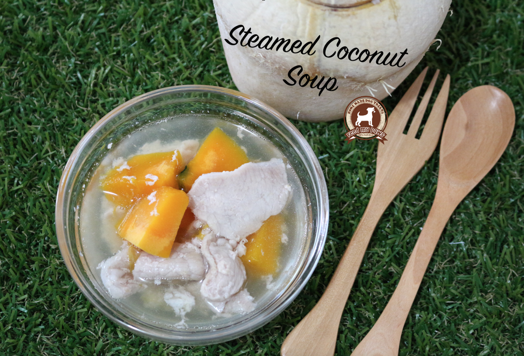 DIY FeedMyPaws Recipe: Coconut Soup for dogs!