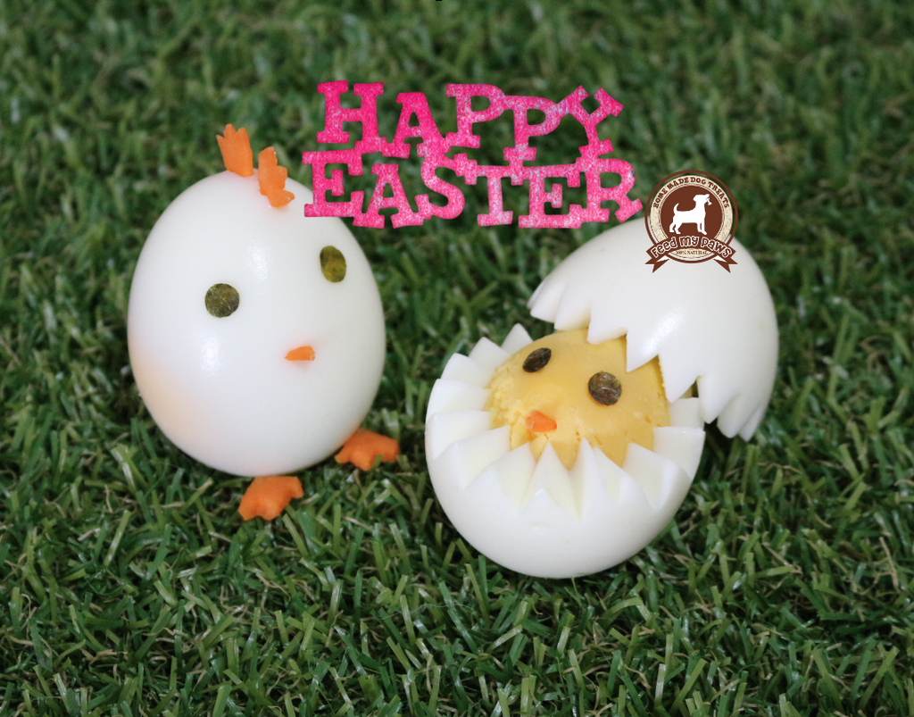 DIY FeedMyPaws Recipe: Easter Egg Family!