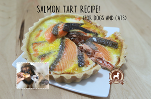 DIY Feed My Paws Recipe: Salmon Tart for Dogs and Cats!