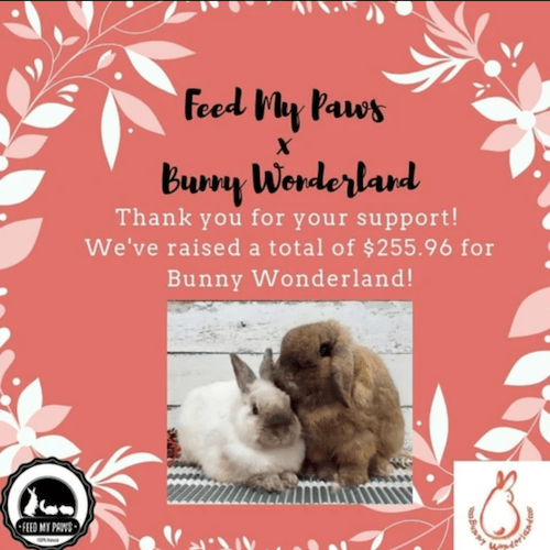 Bunny Wonderland X Feed My Paws Fundraising Cooperation