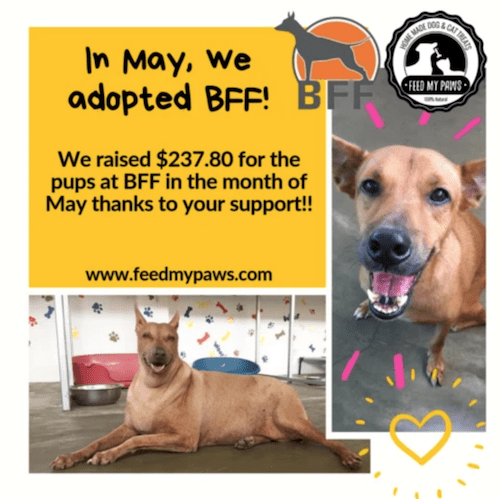 BFF and Feed My Paws Fundraising Collaboration