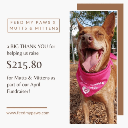 Mutts and Mittens and Feed My Paws Fundraiser Collaboration