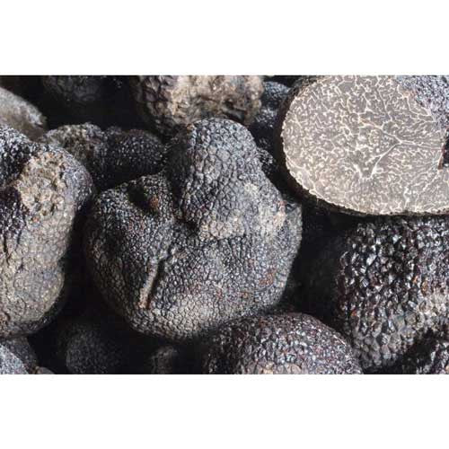 Fresh Black Winter Truffle - Zouf.biz