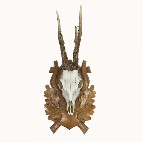 Roe Deer Antlers and Skull on Carved Wood Oak Leaf Trophy Mount