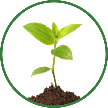 Enhance Plant Growth