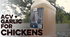 bottle of acv and garlic for chickens