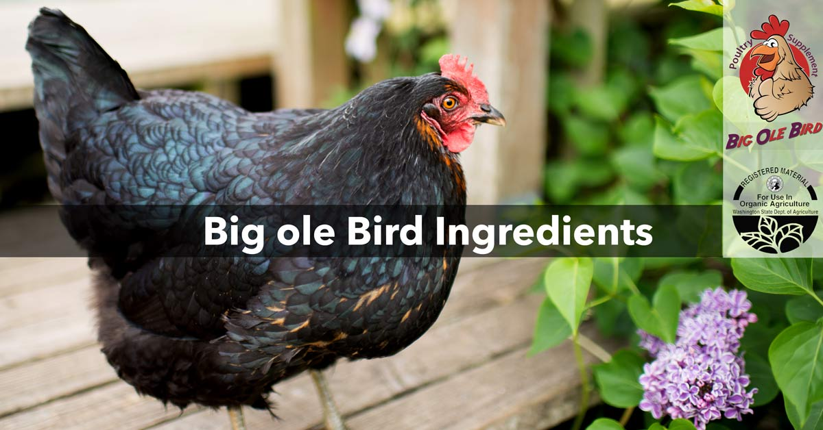 Probiotics for Chickens