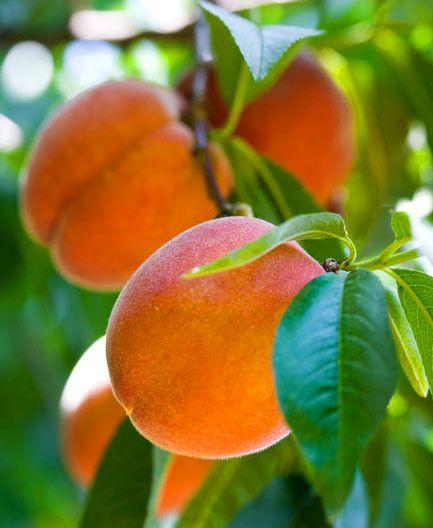 Essential Oil: Peach