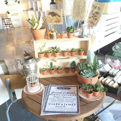 plant, succulent and cacti sale montreal