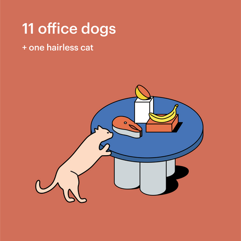 office-dogs-hairless-cat