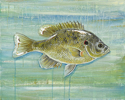 Red Ear Sunfish
