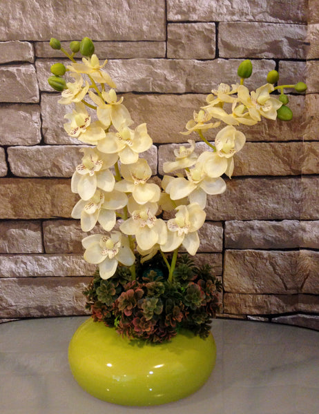 Phalaenopsis Orchid and Succulent Arrangement in Green Ceramic Container, White and Green, Office Home Decor Plant, Handcrafted at the Floral Mart