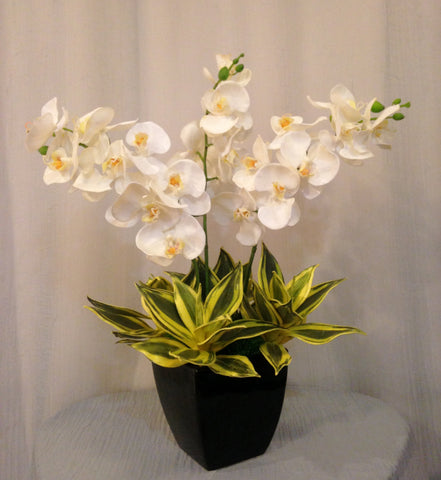 Phalaenopsis Orchid and Mini Agave Plant Arrangement in Black Ceramic Vase, White and Green, Home Decor Artificial Flower Centerpiece, Handcrafted at the Floral Mart