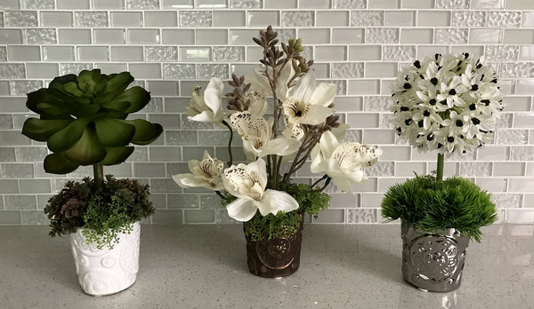 Echeveria Plant, Ornithogalum and Cymbidium Orchid in Rosie Cup, Set of 3, White and Green Color, Office Home Indoor Decor Plant, Handcrafted at The Floral Mart