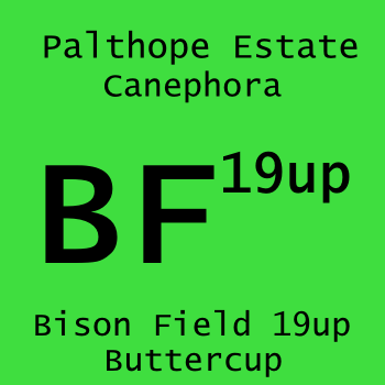 Bison Field 19up 125g