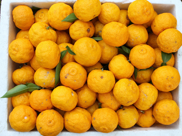 organic yuzu citrus fruit