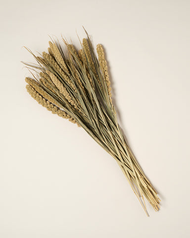 Dried Millet Bunch
