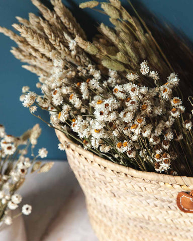 Dried Petite Daisy Bundle