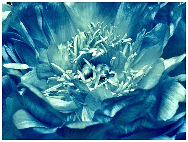 Blue Bloom - David Loftus Print Shop