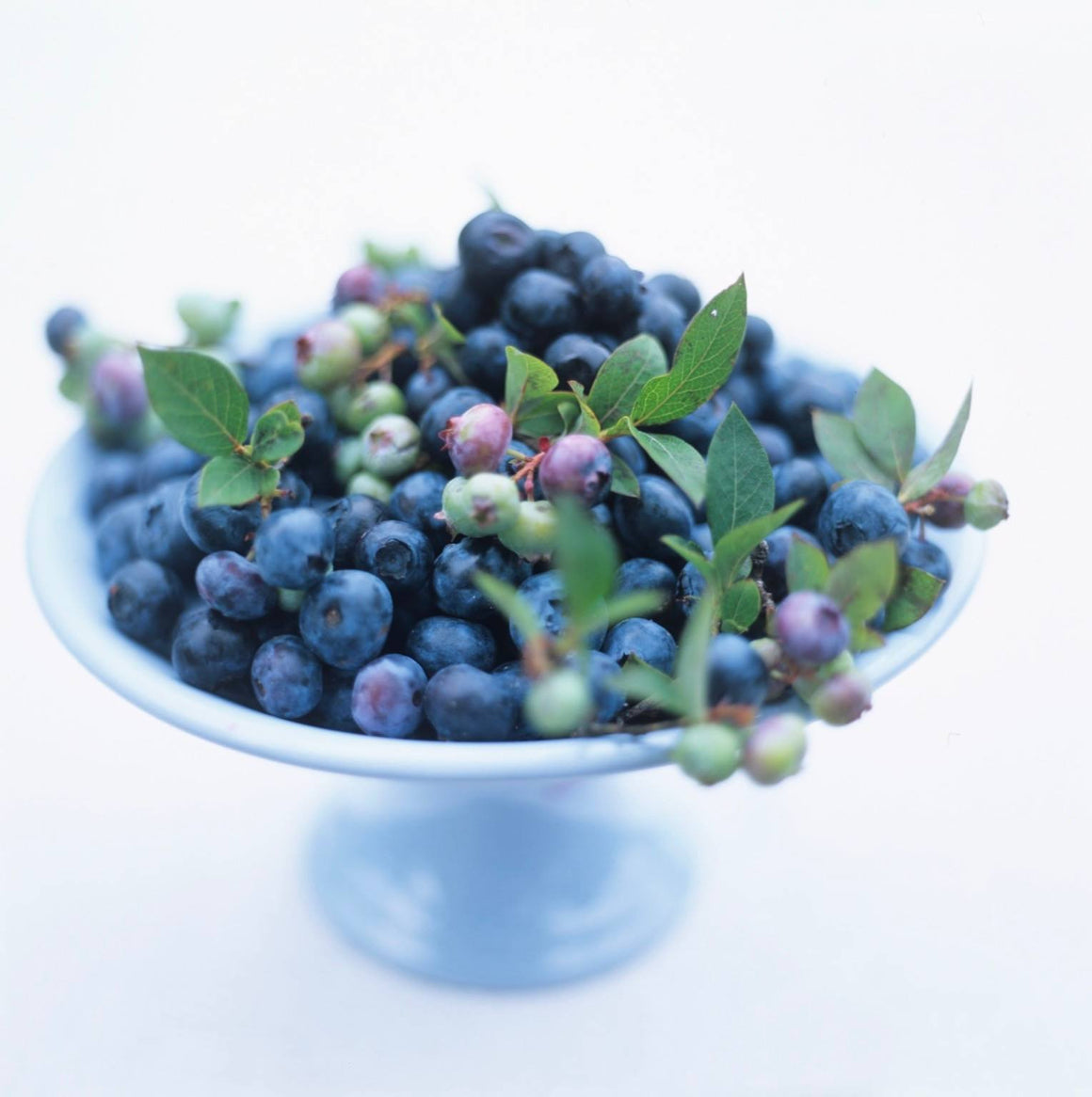 Blueberries - David Loftus Print Shop