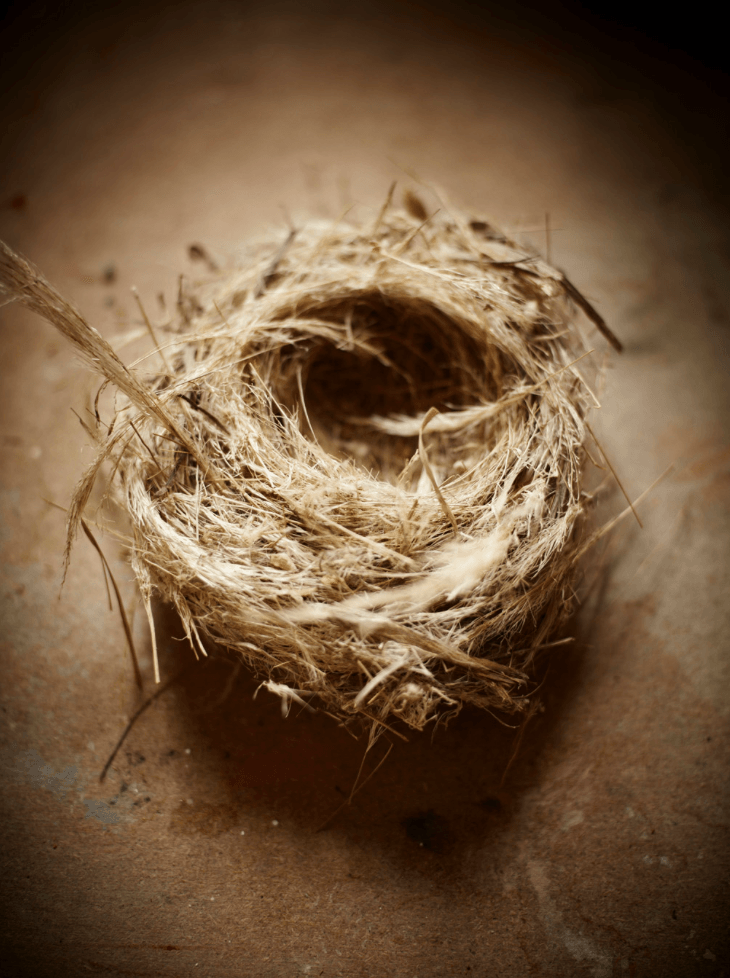 Birds Nest - David Loftus Print Shop