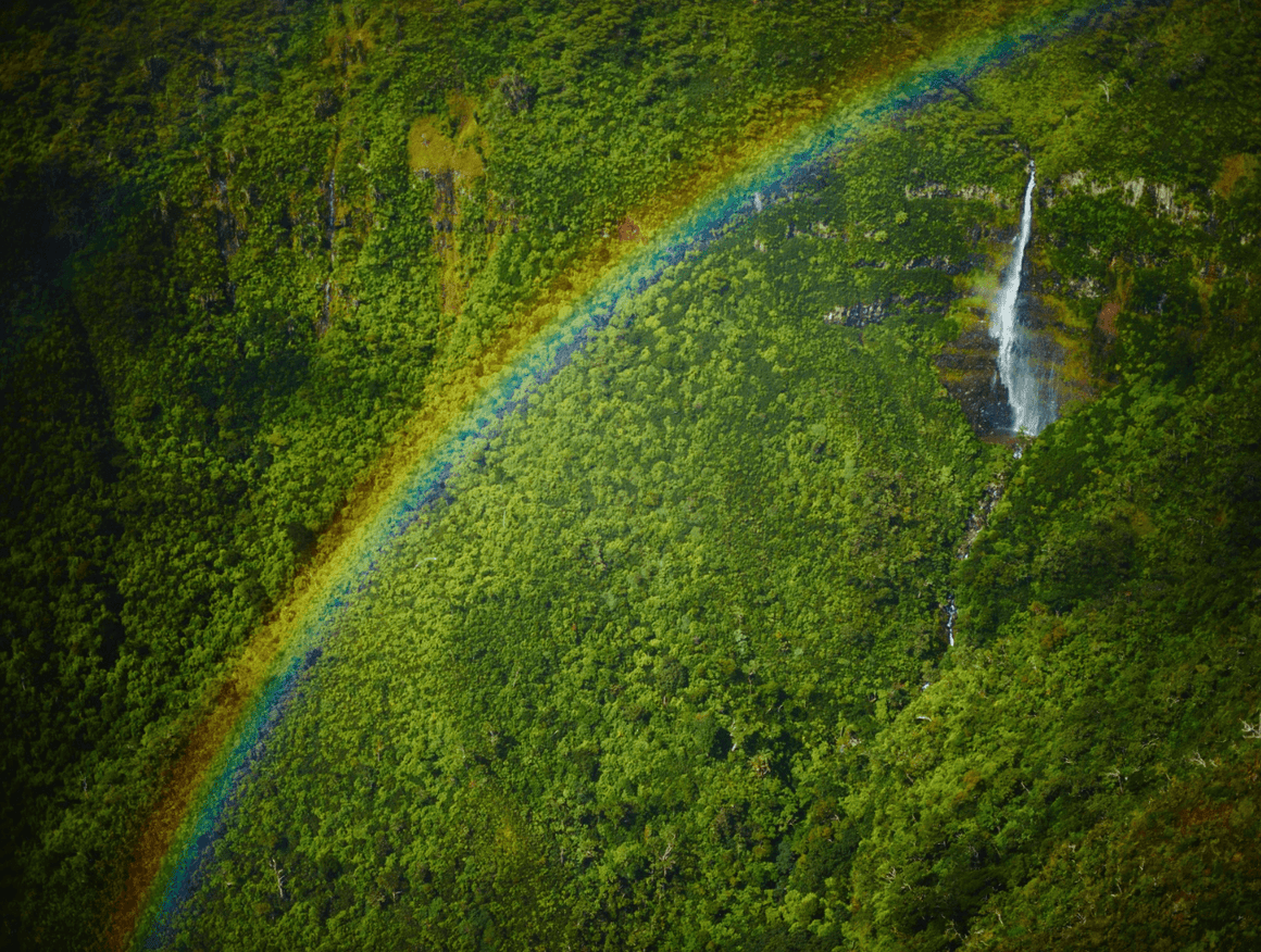 Mauritius Rainbow - David Loftus Print Shop