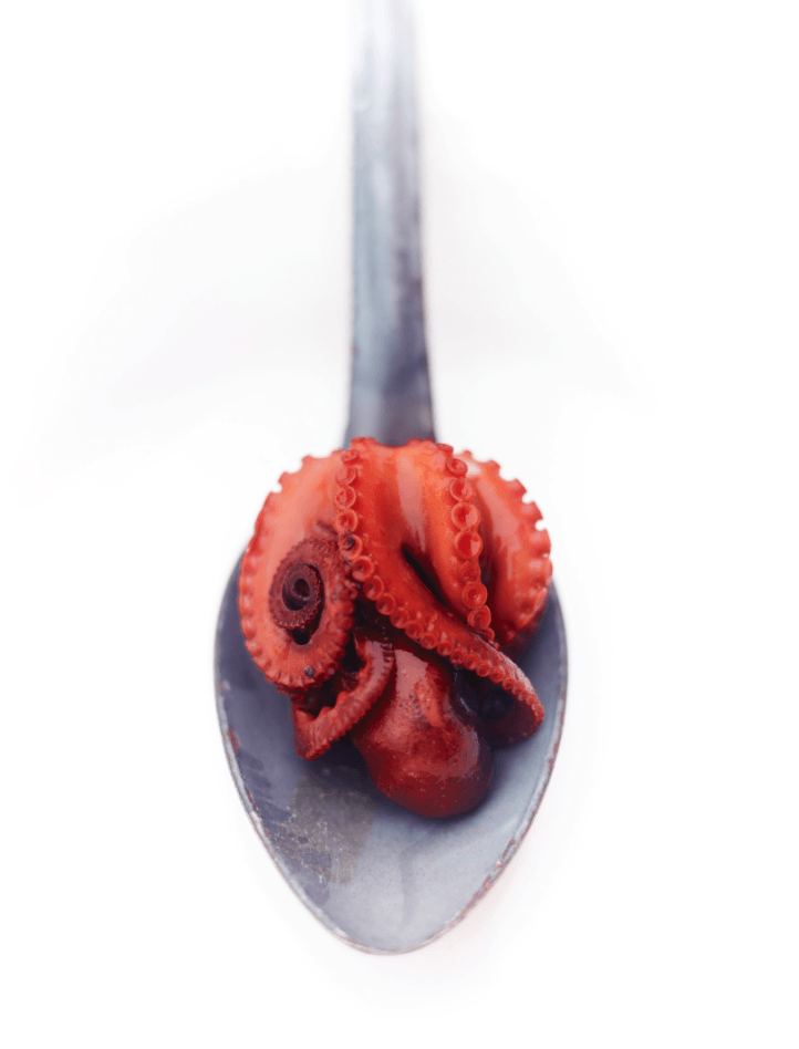Octopus Spoon - David Loftus Print Shop