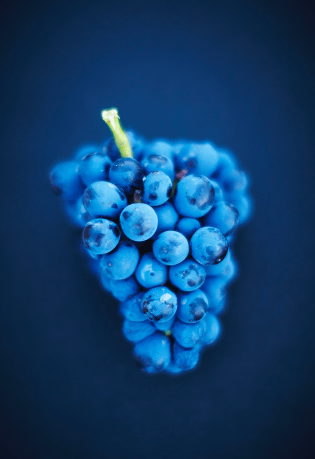Blue Grapes - David Loftus Print Shop