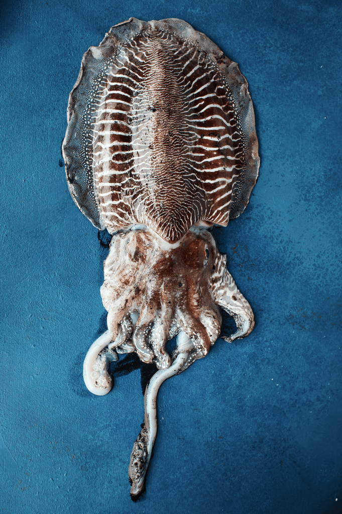Cuttlefish - David Loftus Print Shop