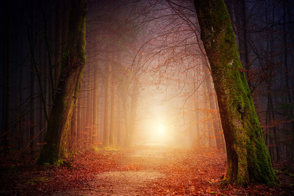 Sun peaking through a wooded path, fallen leaves on the ground. Image credit: jplenio/pixabay.com