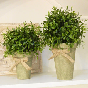 Potted Boxwood Farmhouse Decor