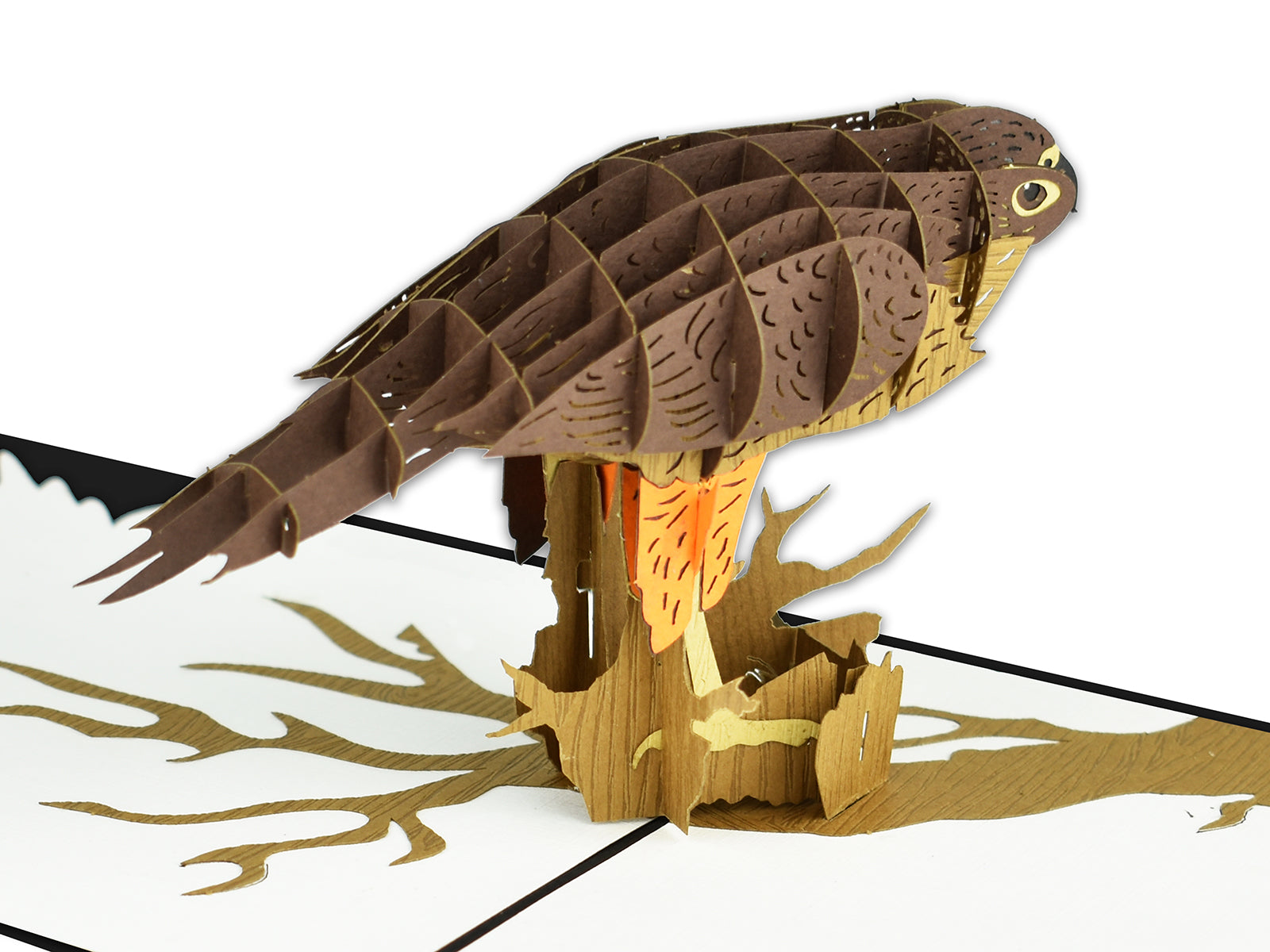 New Zealand Falcon 3D Creative Pop Up Card - close up
