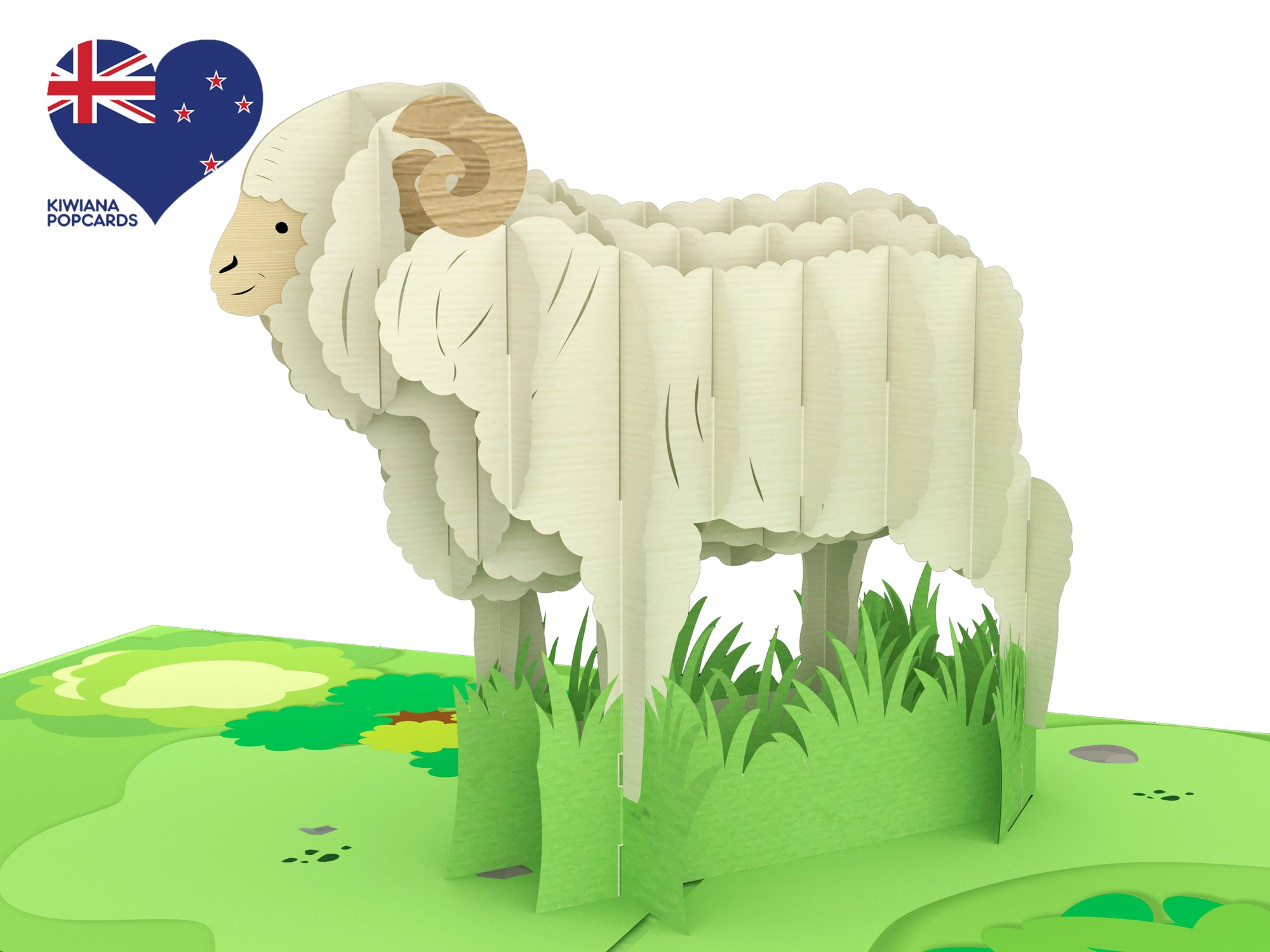 New Zealand Merino Sheep Popcard
