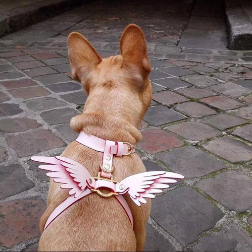 [Free Shipping] 6 Colors Angel Wings Pet Harness Choker SP14320